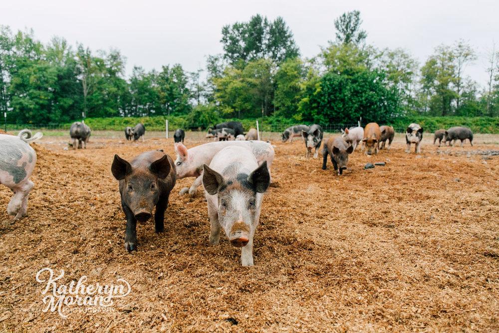 bellingham-farm-food-photographer-katheryn-moran-alluvial-farms-summer-two-2.jpg