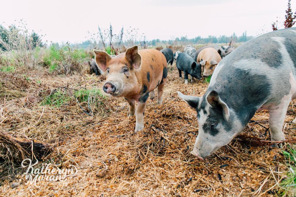 bellingham-farm-food-photographer-katheryn-moran-alluvial-farms-summer-two-6.jpg