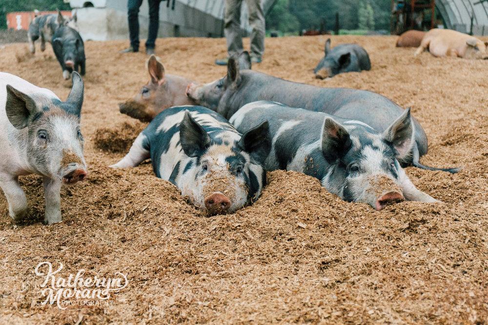 bellingham-farm-food-photographer-katheryn-moran-alluvial-farms-summer-two-4.jpg