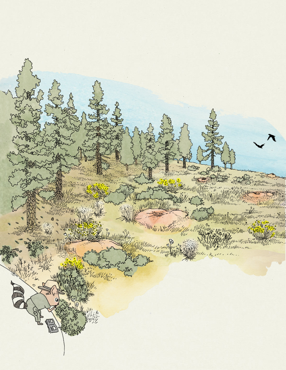 Being in the Park, 2 - Randi Ringtail identifies plants of Bryce Canyon National Park.
