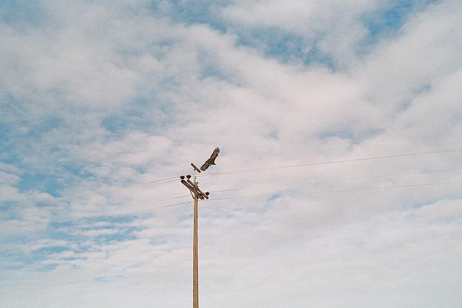 Golden eagle sighting!
