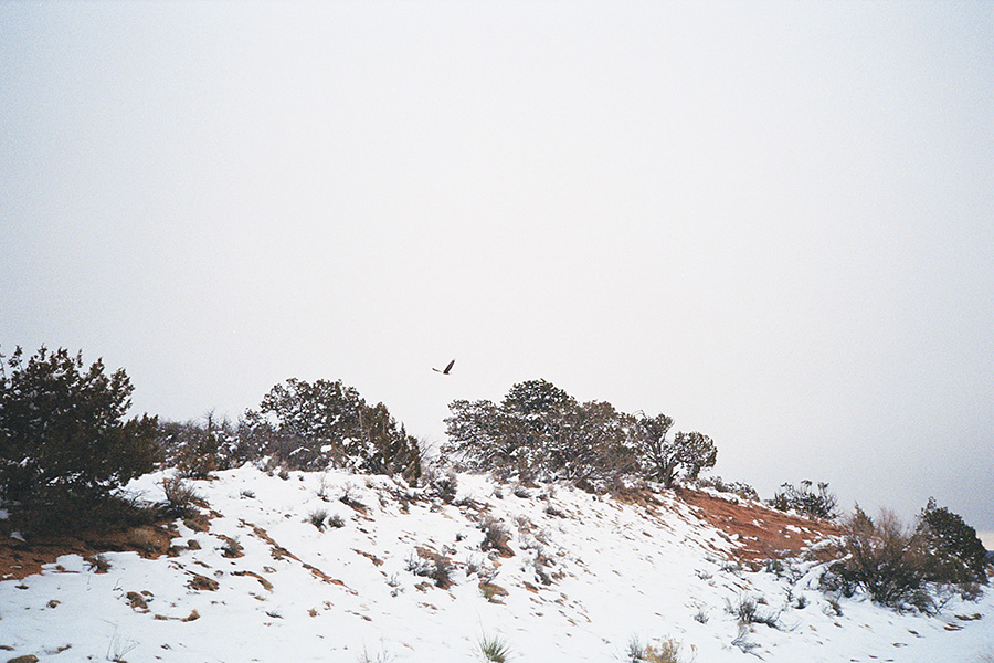 We spotted this bald eagle at the top of a pass and when we took off to follow it in the car, it soared in our sightline for miles and miles down this gorgeous pass...a visual I'll never forget.