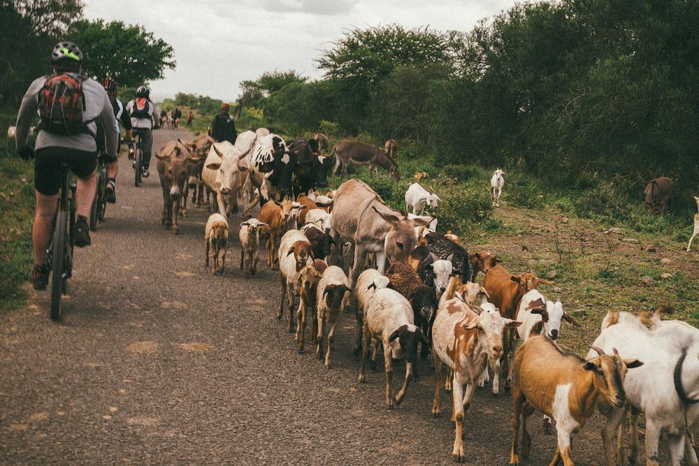 ^ Tanzanian traffic.