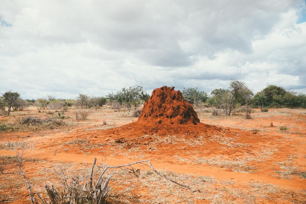 ^ Termite mound.