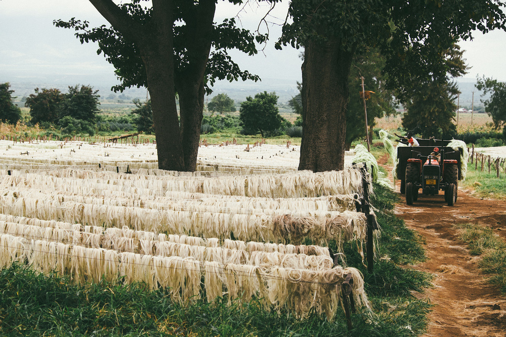^ Sisal production from the endless miles of agave plants we rode by is the oldest commercial cash crop in Tanzania.
