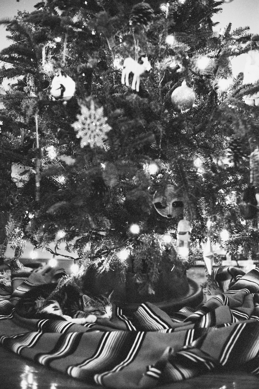 12_25_15_CHRISTMAS_032.jpg