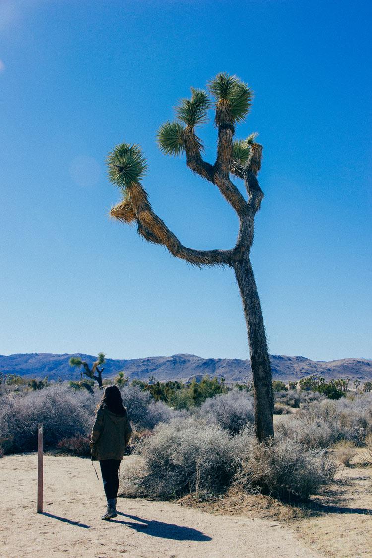 j-tree-web-3.jpg
