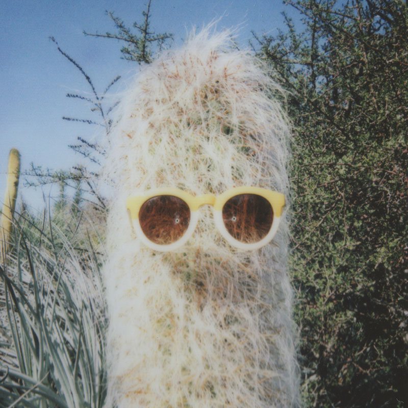 Cactus Cooler / Julia Walck