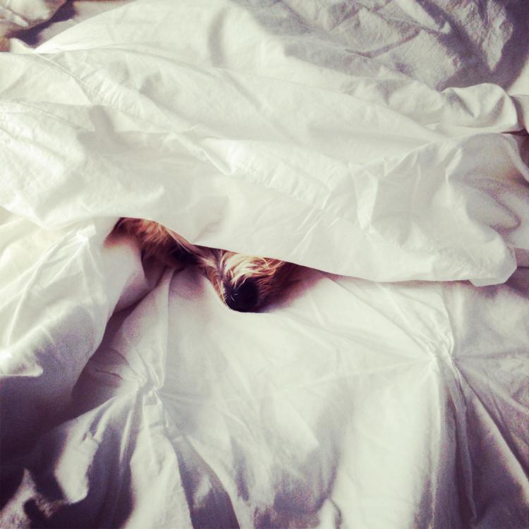 Sleeping in....   #BAMBOO