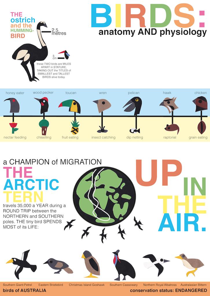 Birds: Poster Series
