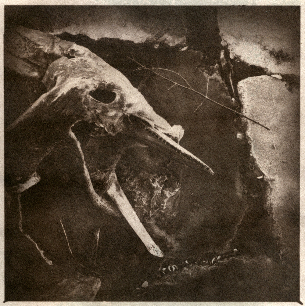 Remains on Grand Terre island, Salt Print, 2015