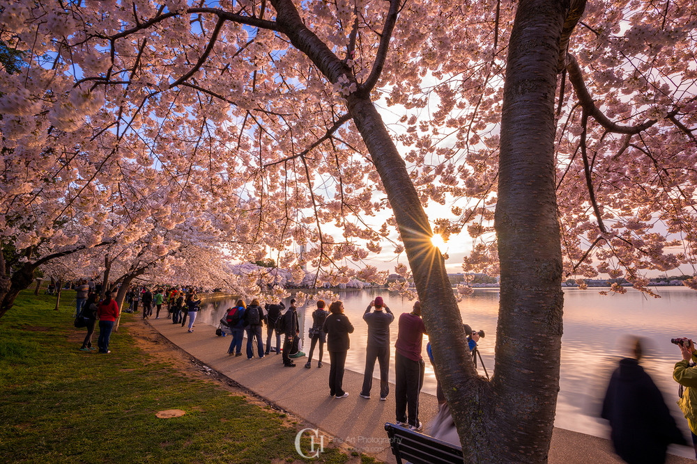 The crowd was slowly starting to move around Tidal Basin after the sunrise