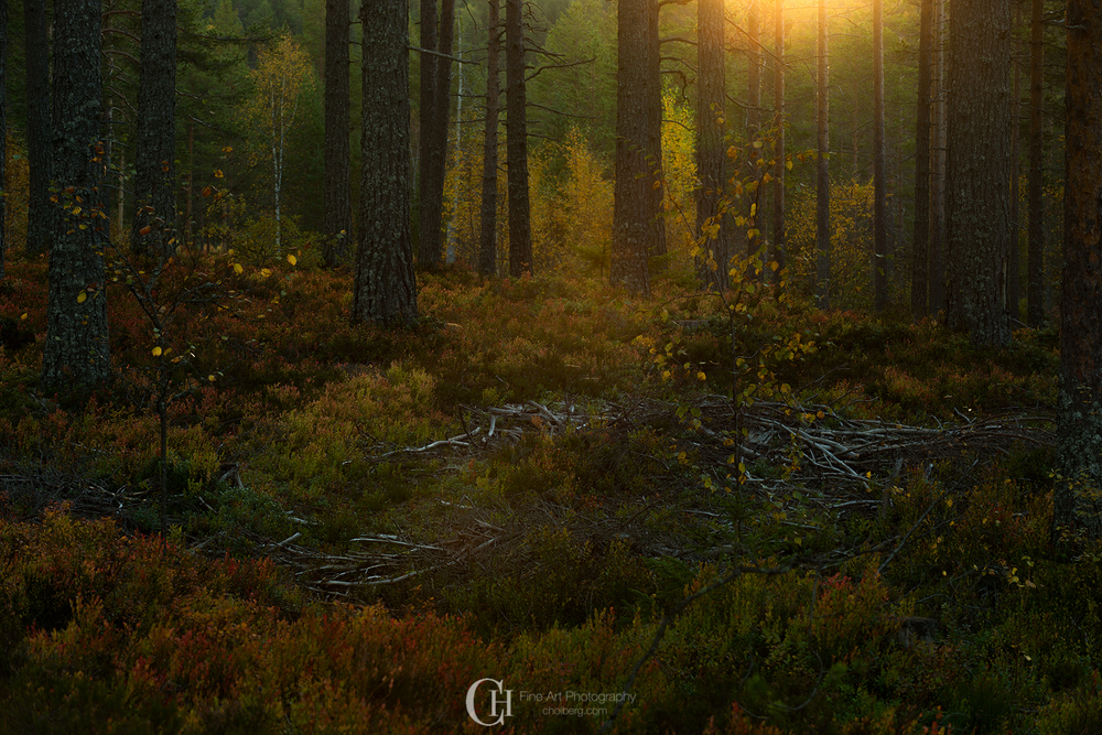 deep-woods-sunrise-oksne-fall.jpg