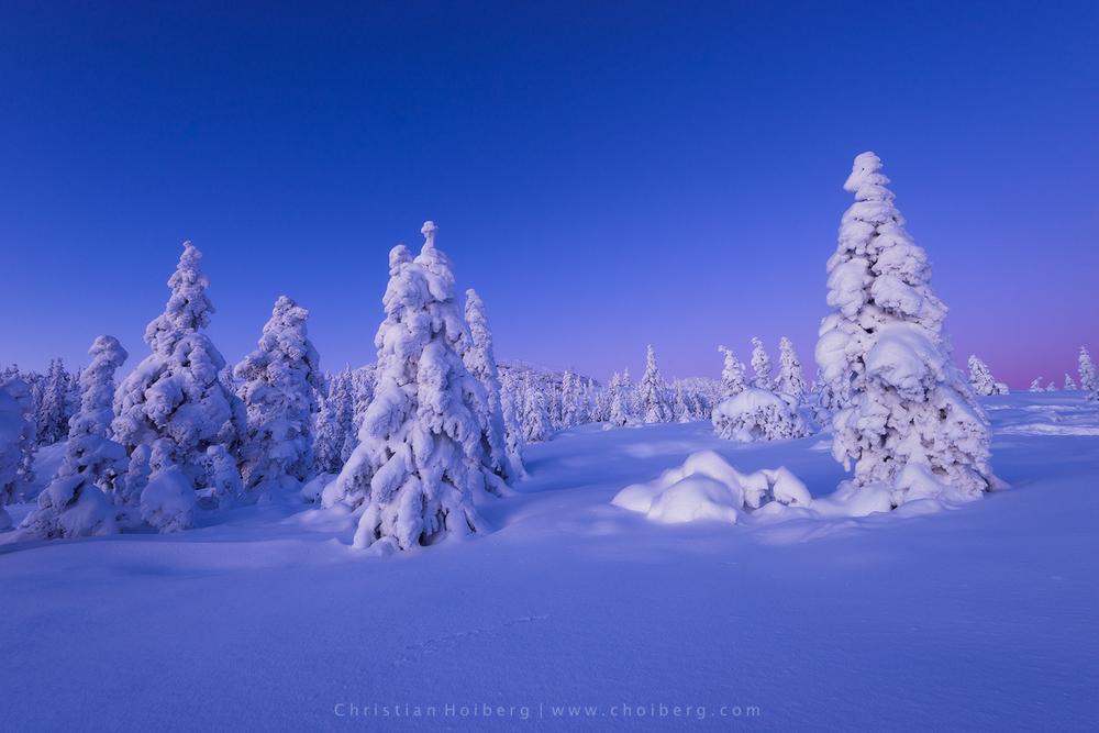 Knuten-bluehour.jpg