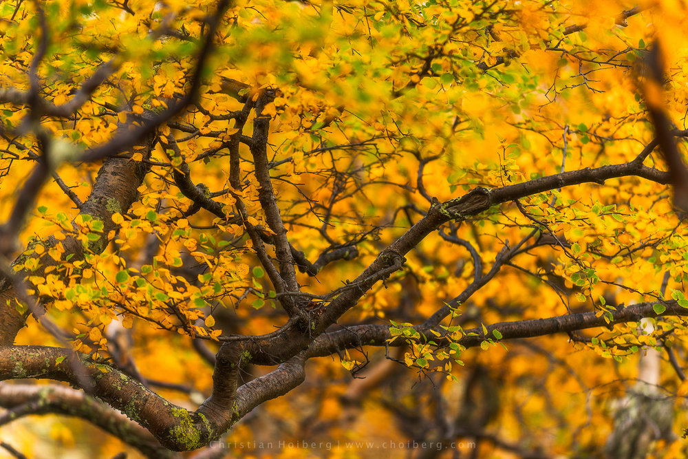 Autumn-tree-leaves.jpg