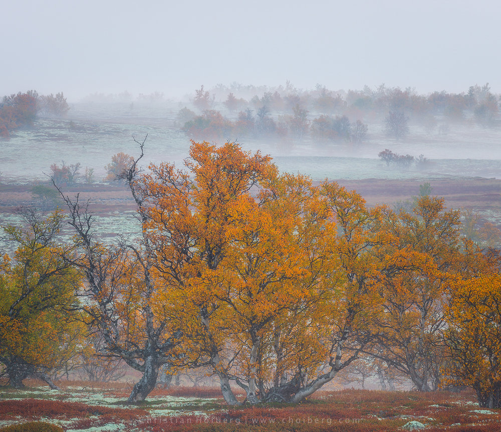 autumn-trees-fog.jpg