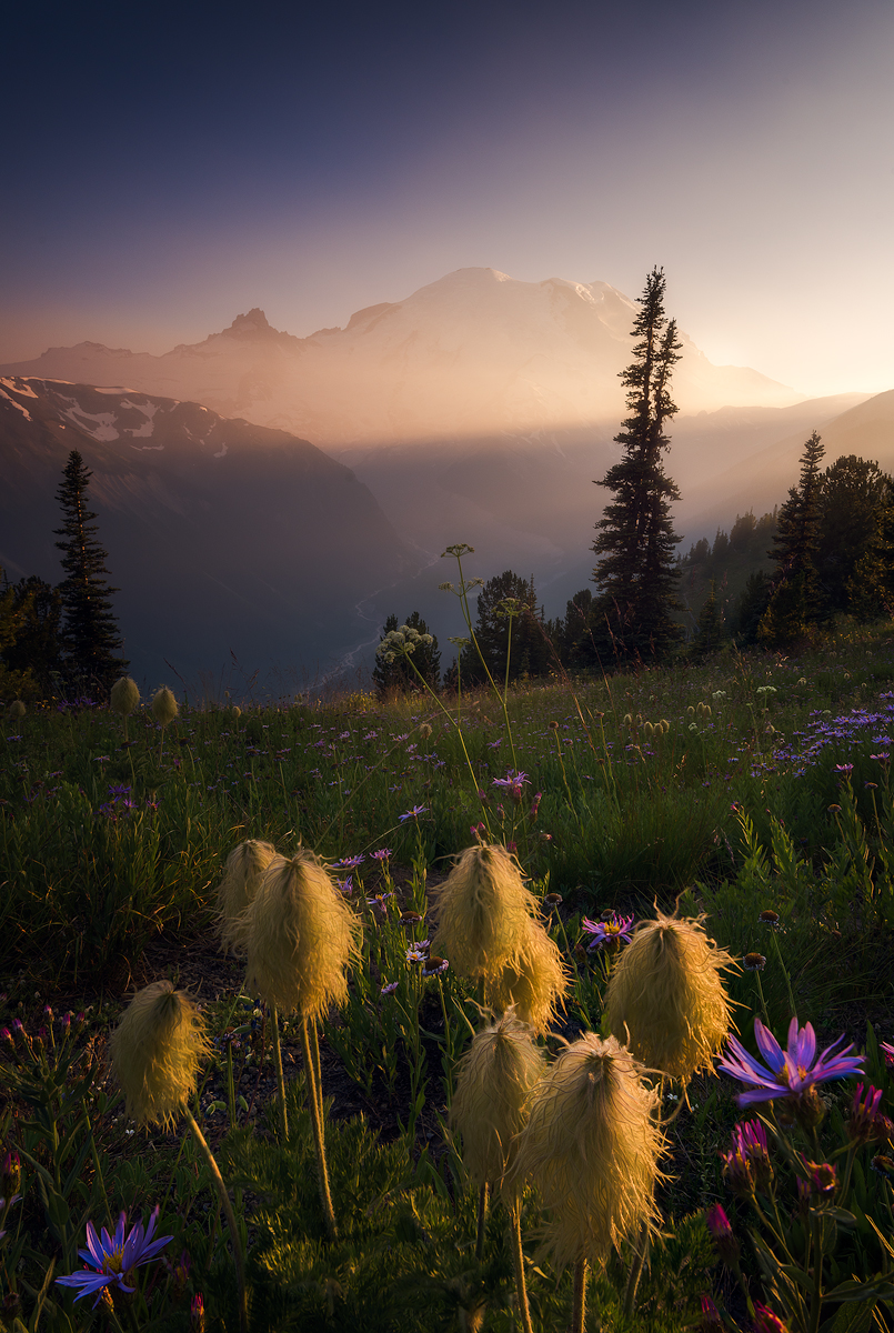 MtRainier-Wildflowers-Temp.jpg