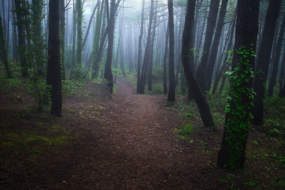 Liencres-foggy-woods.jpg