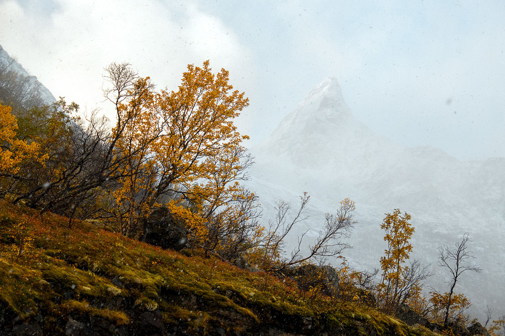 Senja-Autumn-Snow.jpg