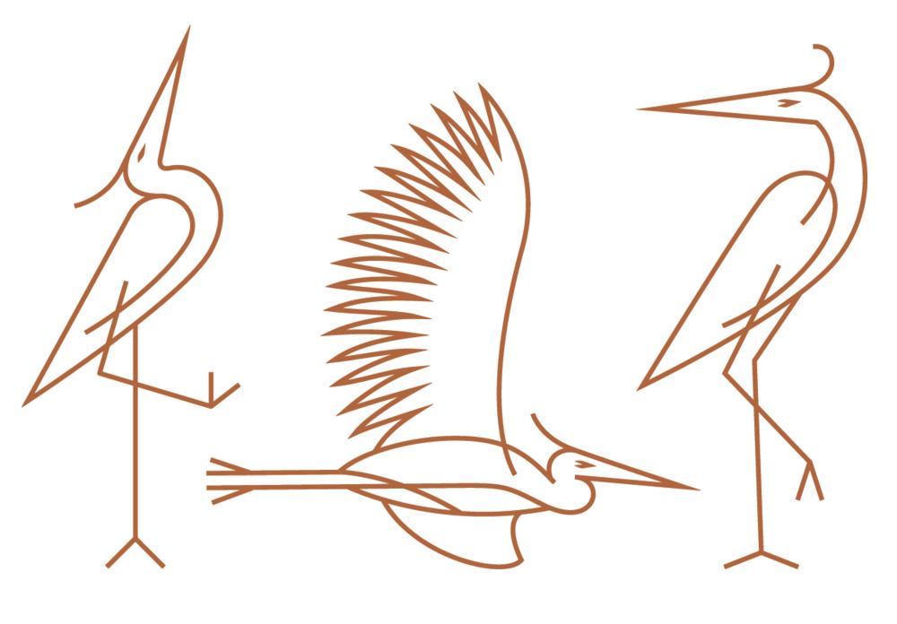 BIRD-2.png
