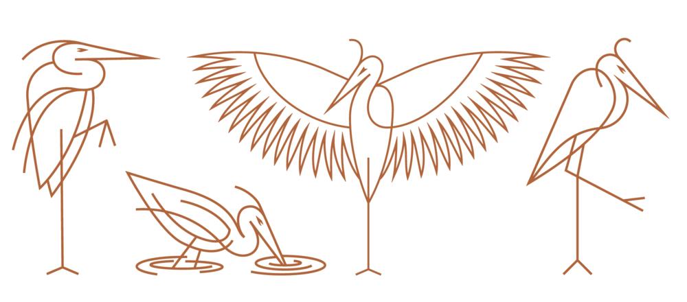 BIRD-3.png
