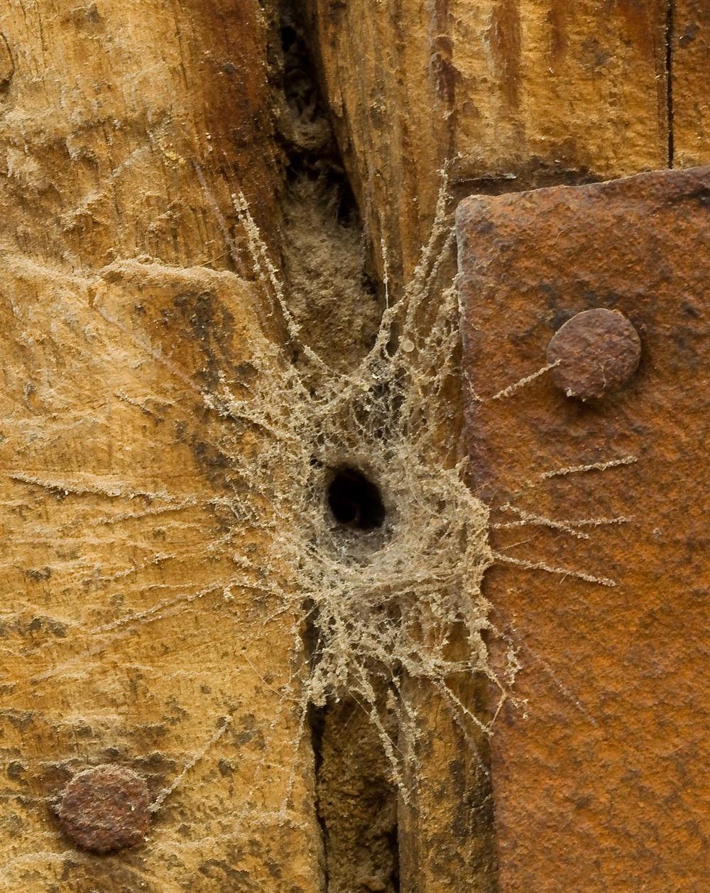 Spider web, Cairo