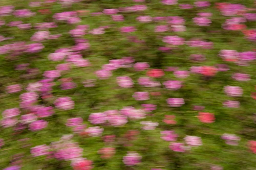 Flowers a la Monet