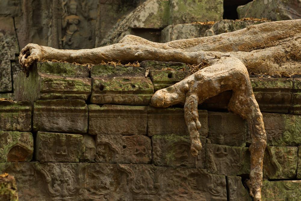 A crawling tree, Cambodia