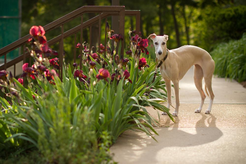 dogs-3-3.jpg