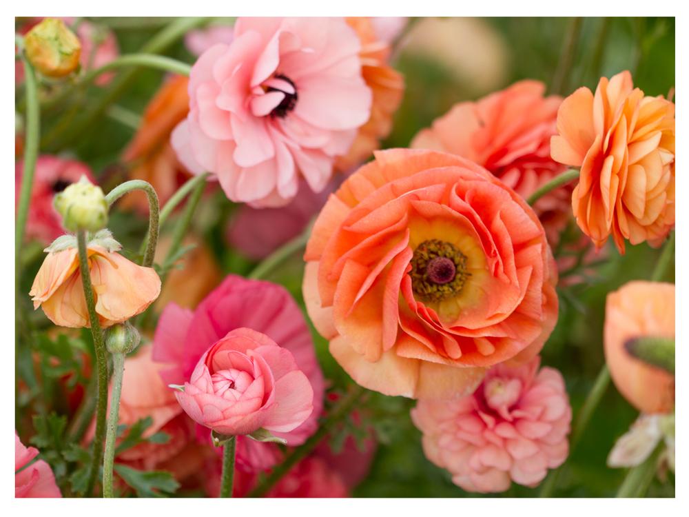 Flowers 8.jpg