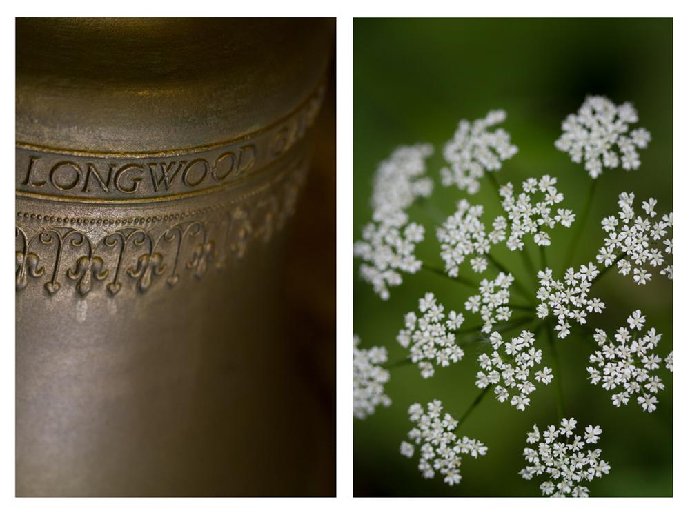 Longwoods-1.jpg
