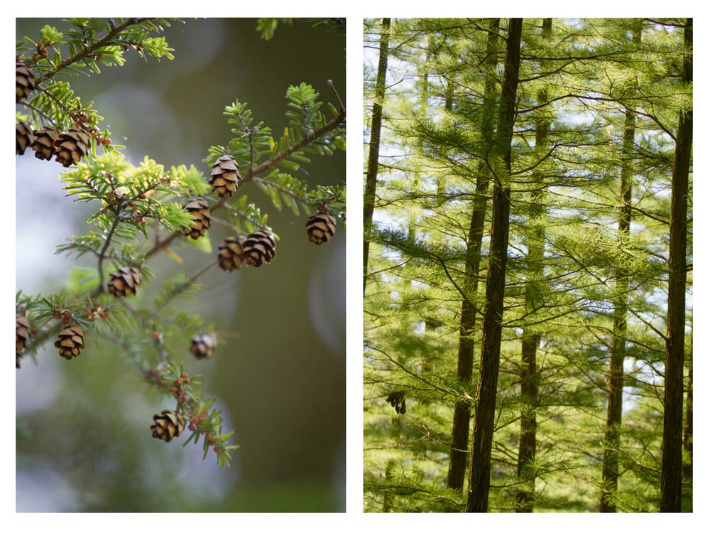 Longwoods-16.jpg
