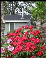 The Hammond House Guest Cottage in Port Townsend, WA. Nestled in the single city lot sized back yard of the main house, this little cottage is tiny and a perfect size for visitors to the fun and artsy waterside town.
