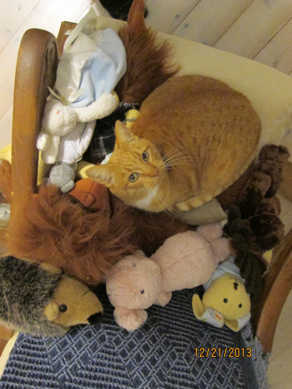 Our cat in her favorite place teeming with friends.