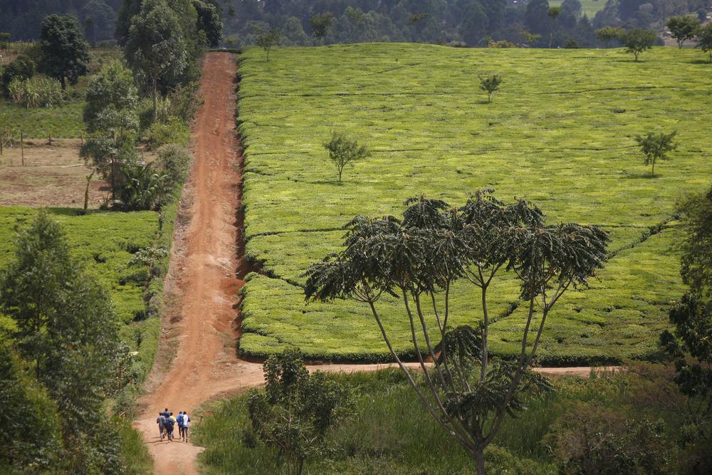 """""""Courir"""" par Christophe Calais. Des coureurs kenyans de l'ethnie Kalenjin s'entraînan malgré les conflits ethniques"""