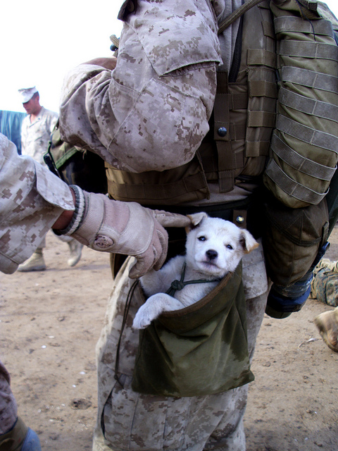 A small puppy wandered up to U.S. Marines from Alpha Company, 1st Battalion 6th Marines, in Marjah, Afghanistan on ******. After following the Marines numerous miles, a soft hearted Marine picked the puppy up and carried the puppy in his drop pouch.
