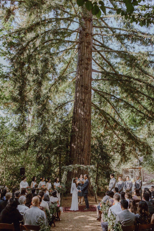 Redwoods wedding ceremony at Sand Rock Farm