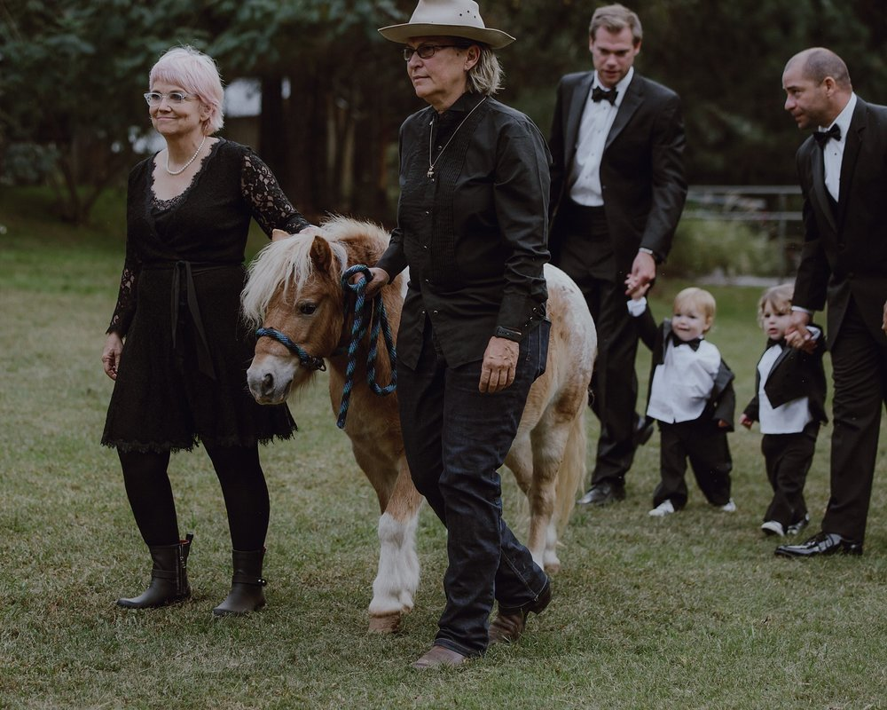 Tiny horse at a wedding