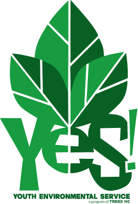 YES-logo-(NEW).png
