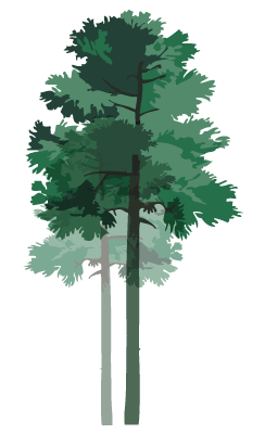 pine-stand-lg.png