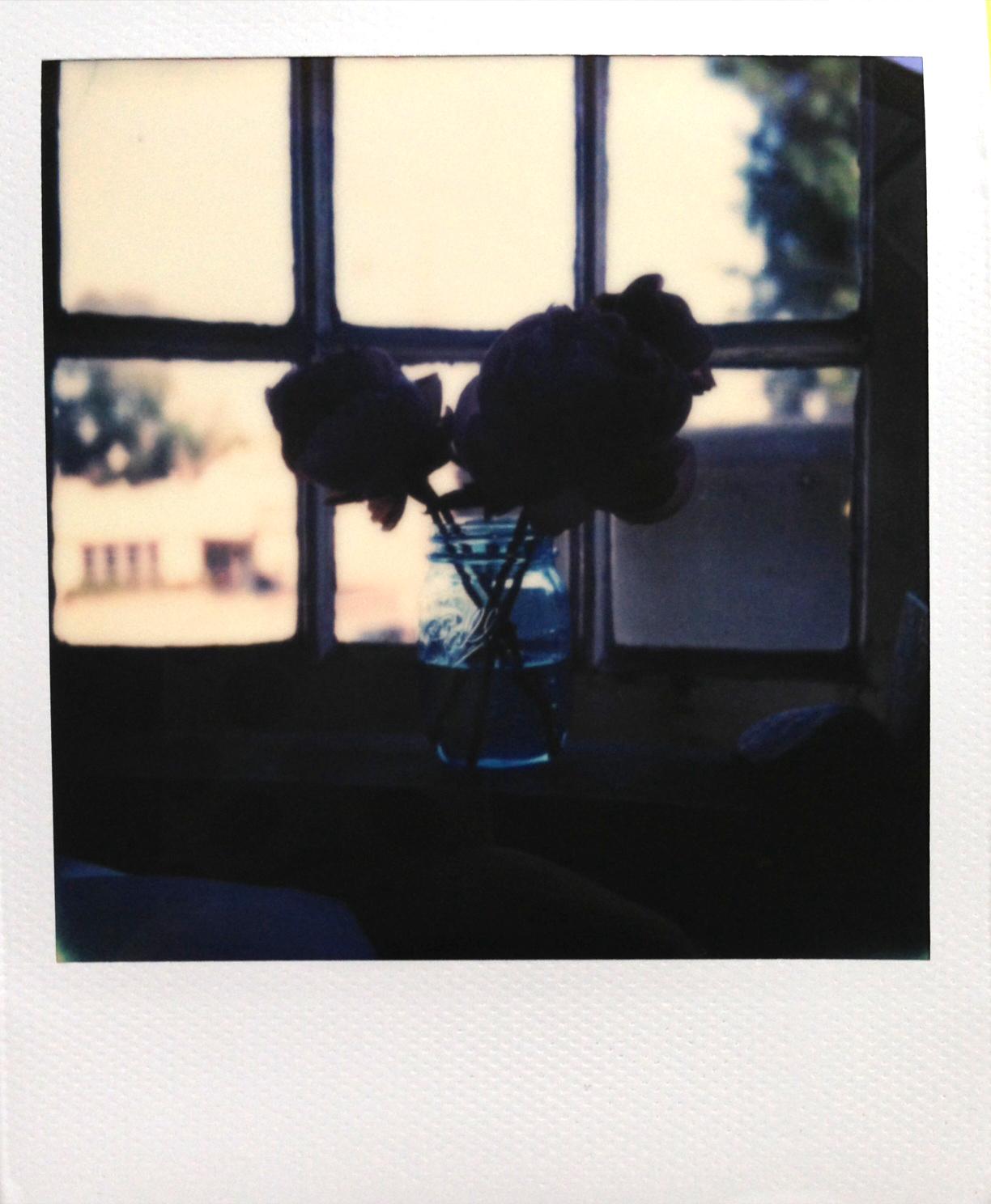 Peonies Polaroid