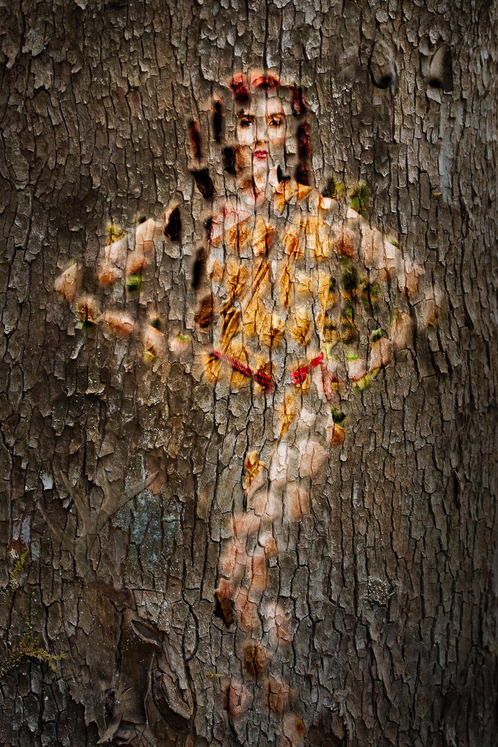 Kenzi-tree-Edit.jpg
