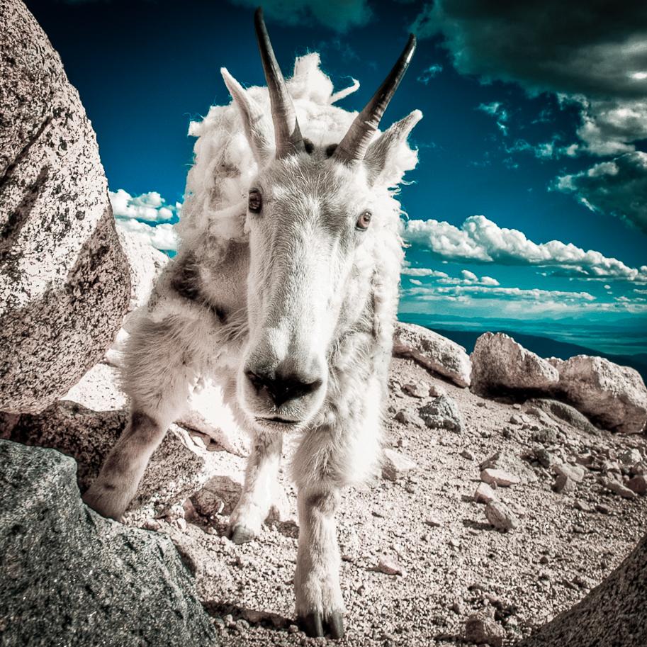 RidenourPhoto-American-West-3.jpg