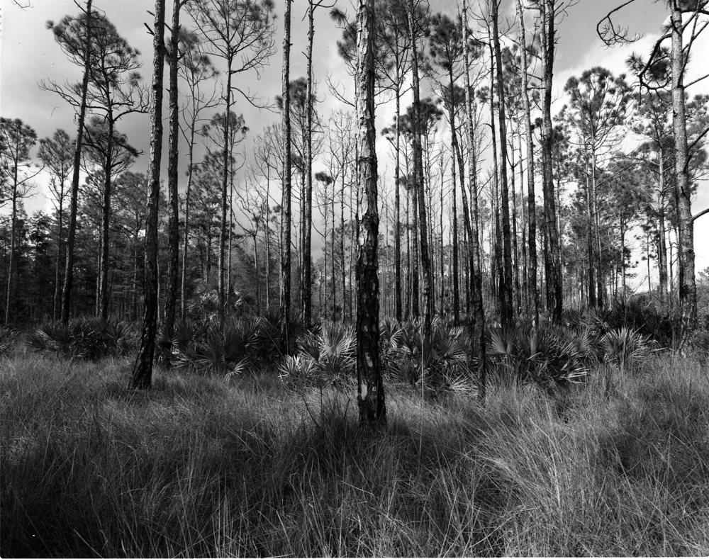 Everglades010.jpg