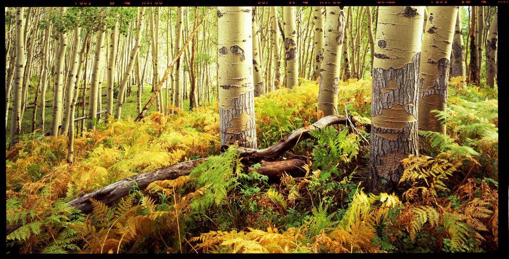 Flat Top Wilderness