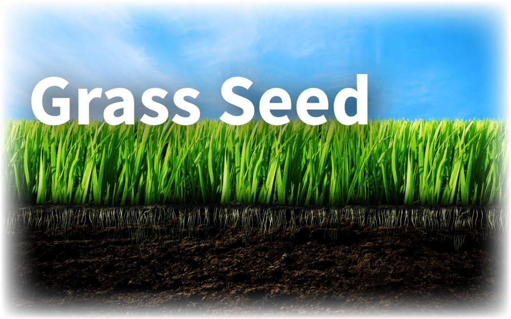 best rated grass seed