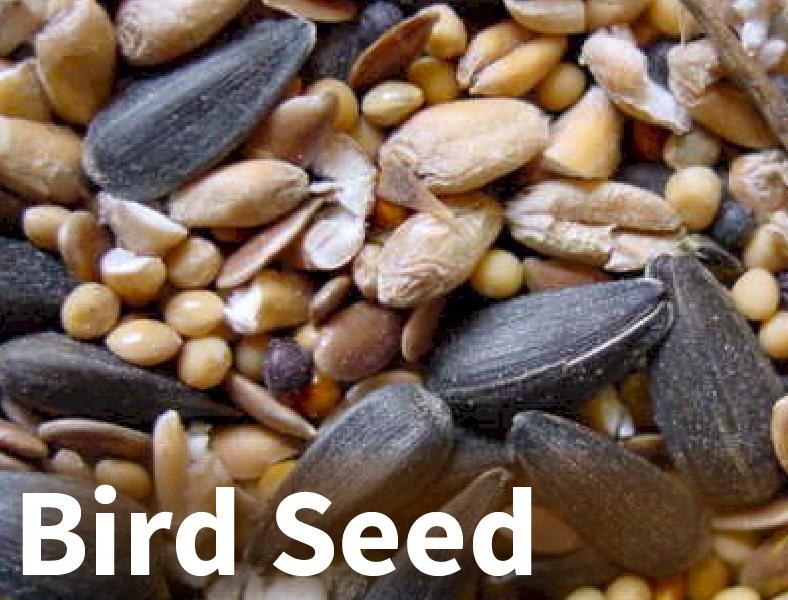 bird seed-01.jpg