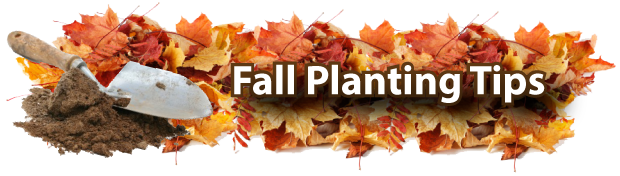 fall planting tips-01.png