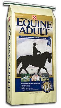 Equine Adult