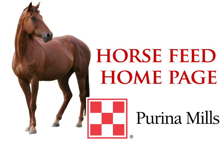 horse home-01.png
